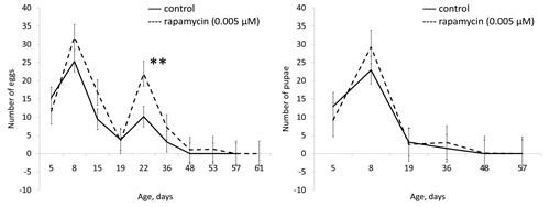 Effect of rapamycin (0.005 µМ) on fertility of females Drosophila melanogaster.