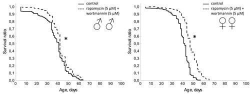 Effect of combined use of rapamycin (5 µМ) and wortmannin (5 µМ) on lifespan Drosophila melanogaster.