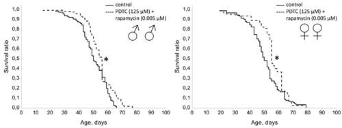Effect of combined use of PDTC (125 µМ) and rapamycin (0.005 µМ) on lifespan Drosophila melanogaster.