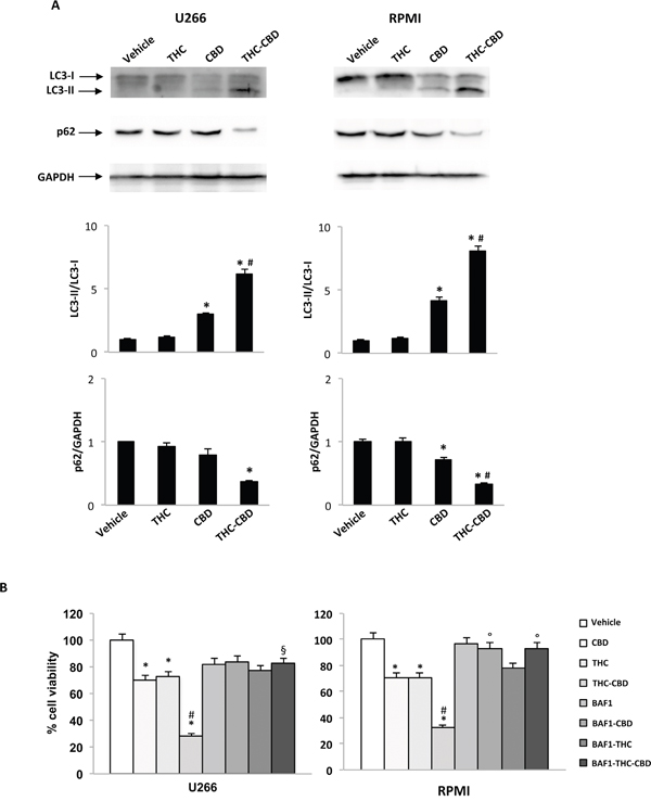 THC-CBD combination induces autophagic-cell death in MM cell lines.