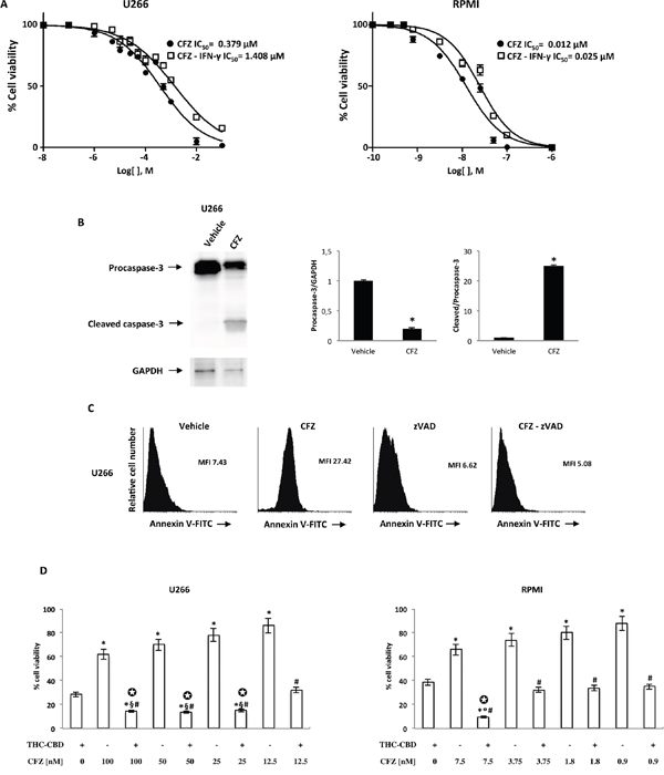 The effect of CFZ alone or in combination with THC-CBD on cell viability.