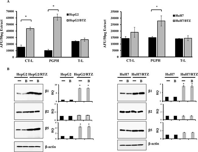 Bortezomib-resistant HCC cells show higher expression of constitutive proteasome subunits.
