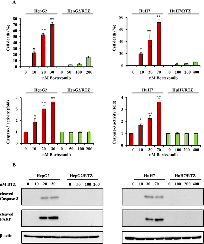 The dose-dependent analysis of caspase-3 activity and the expression of apoptosis-associated proteins in bortezomib-resistant HCC cells and their parental cells.