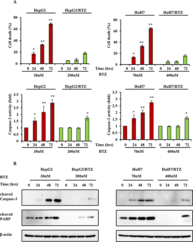 The time-dependent analysis of caspase-3 activity and the expression of apoptosis-associated proteins in bortezomib-resistant HCC cells and their parental cells.