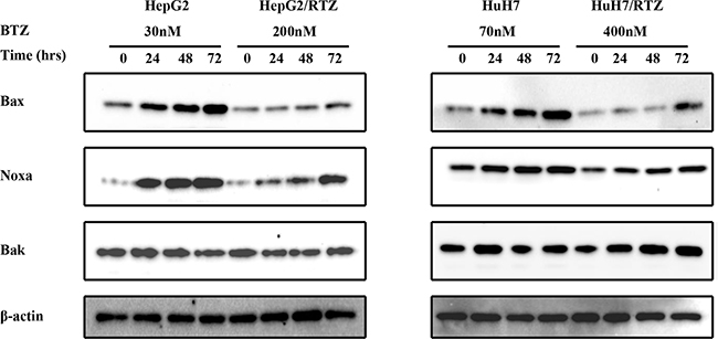 The time-dependent analysis of Bcl-2 family proteins in bortezomib-resistant HCC cells and their parental cells.