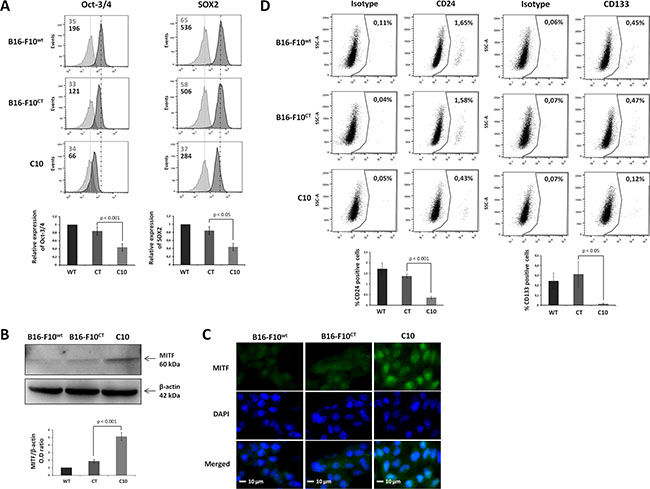 IGF-1 downregulation decreases the expression of cancer stem-like and pluripotency markers in B16-F10 melanoma cells.
