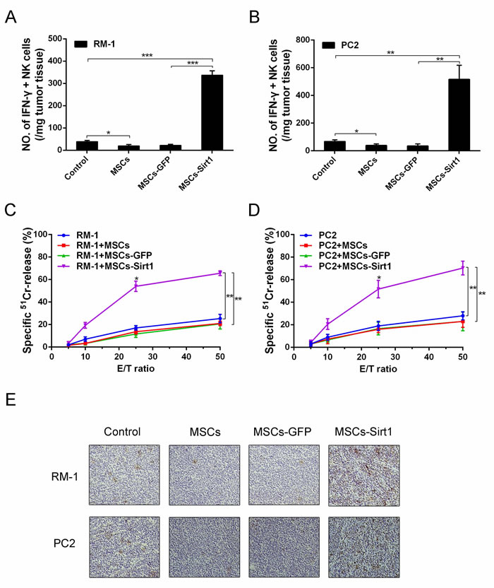 Tumor infiltrating NK cells evaluation in tumor-bearing mice.
