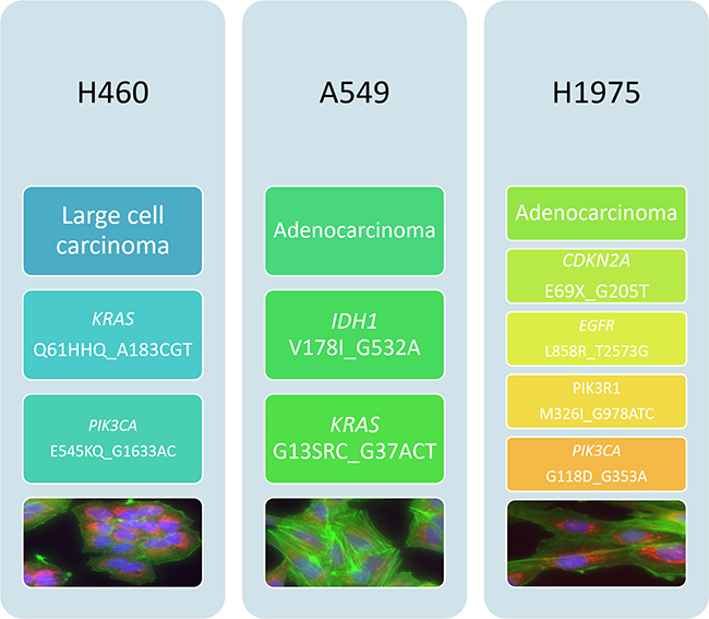 Histological and mutational characterisation of NSCLC cell lines.