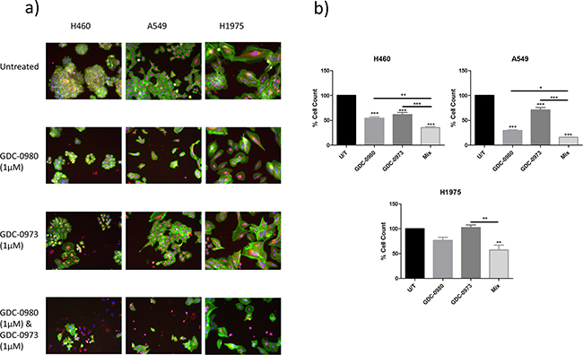 Effects of PI3K-mTOR and MEK co-targeted inhibition on NSCLC cell viability.