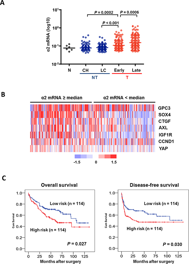 Figure 5. An integrin α2-activated YAP oncogenic signature predicts prognostic outcomes in HCC patients.