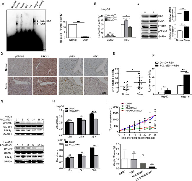 Phosphorylation of PPARγ up-regulated by MEK/ERK kinase increases the proliferation of HCC.