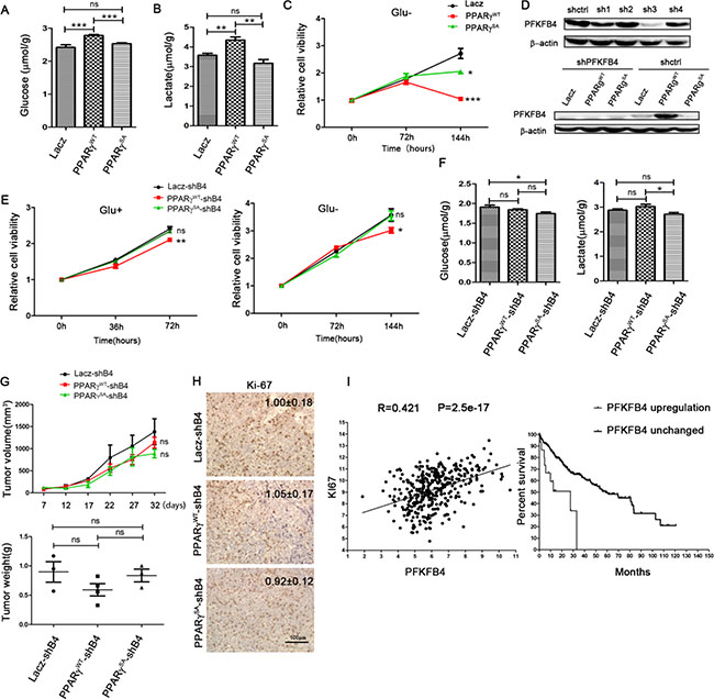Phosphorylation of PPARγ enhances the glycolysis in HCC dependent on PFKFB4.