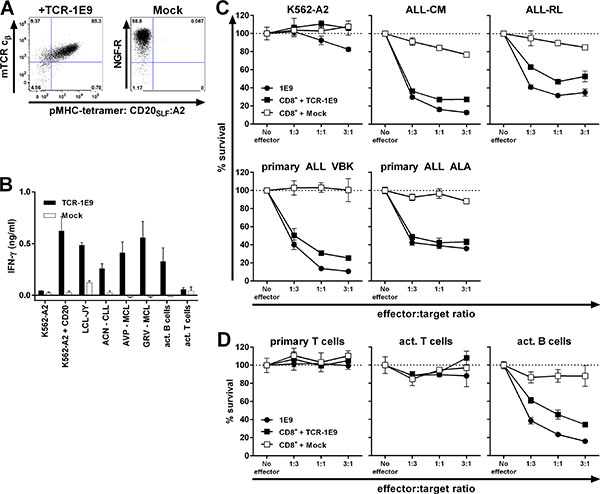 TCR gene transfer installs potent CD20-specific reactivity onto recipient CD8+ T-cells.