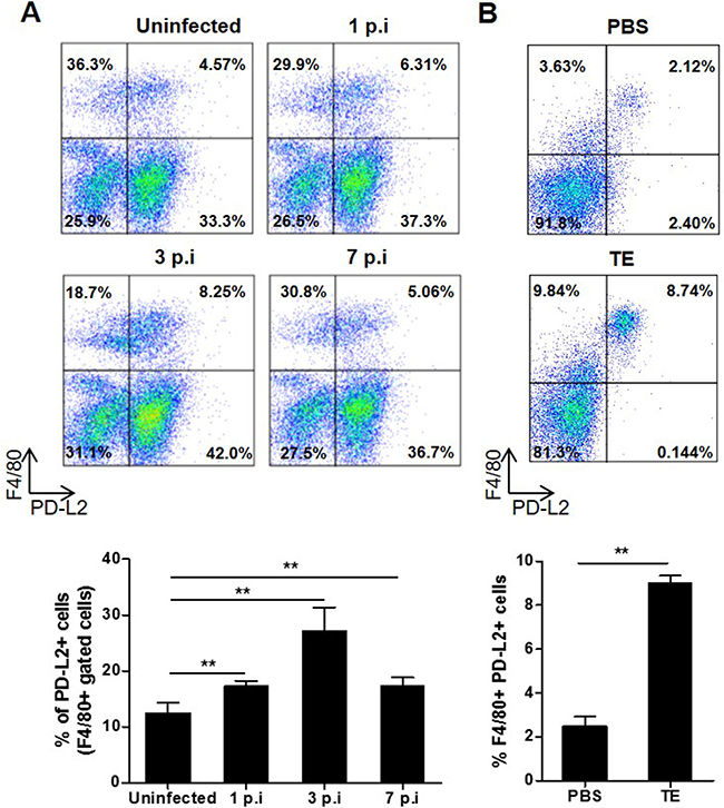 Effect of F. hepatica infection or total extract antigen injection on PD-L2 expression by peritoneal macrophages.