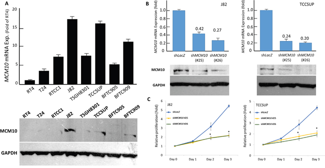 MCM10 expression promotes growth of UC cells in vitro.