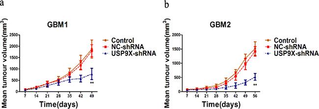 USP9X knockdown decreased tumorigenesis of glioma cells in vivo.