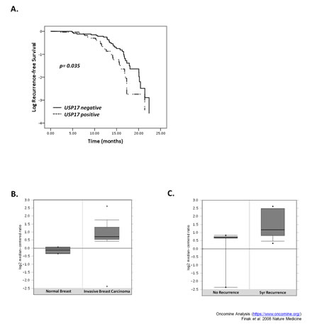 High USP17 levels correlated with reduced recurrence-free survival.