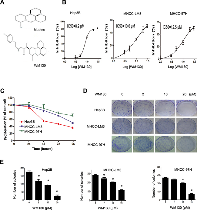 Effect of WM130 on the proliferation and colony formation of human hepatoma cells.