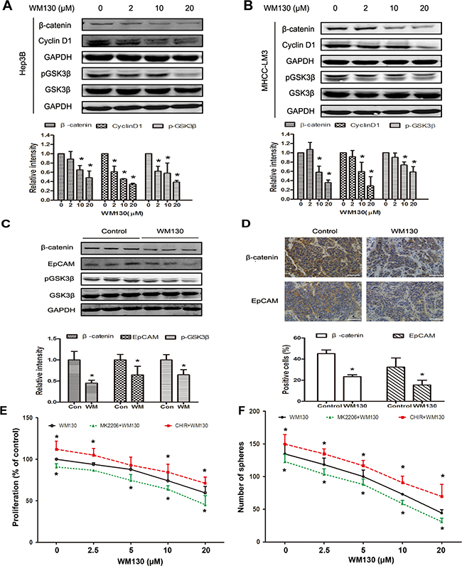 WM130 suppresses the GSK3β/β-catenin pathway in vitro and in vivo.