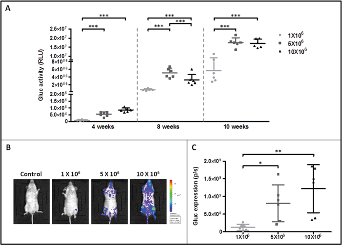 Monitoring of ROSAKIT D816V-Gluc cells engraftment in injected mice by measurement of Gluc activity in blood and by IVIS.