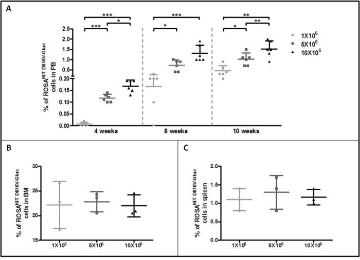 Evaluation of ROSAKIT D816V-Gluc cells numbers by flow cytometry in peripheral blood, bone marrow and spleen.