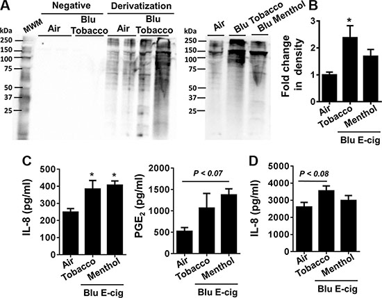 E-cig aerosol resulted in increased protein carbonylation and inflammatory responses in human periodontal ligament fibroblasts (HPdLFs) and human gingival epithelium progenitors, pooled (HGEPp).