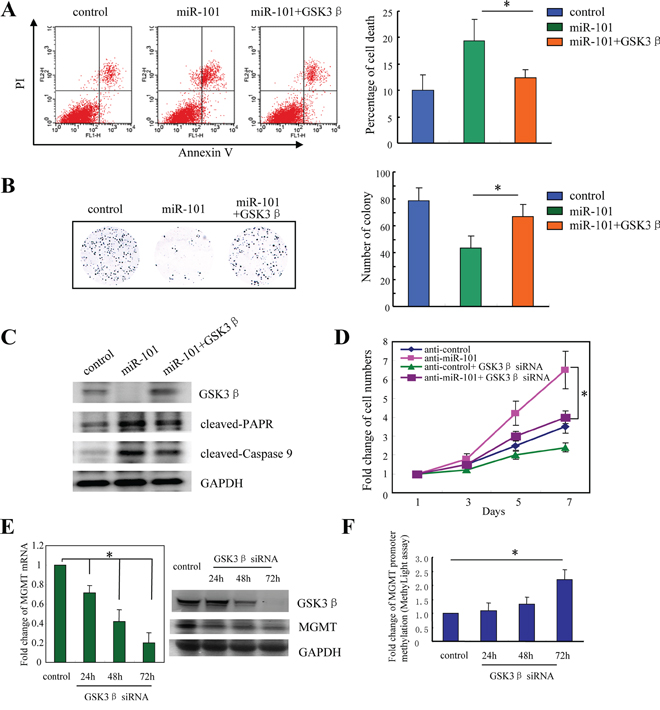 MicroR-101 sensitizes resistant GBM cells to TMZ through downregulation of GSK3β.