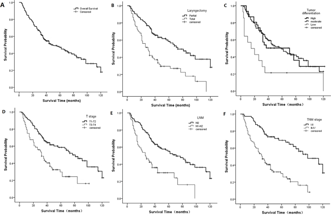 Kaplan-Meier curves for potential factors influencing LSCC patient survival.