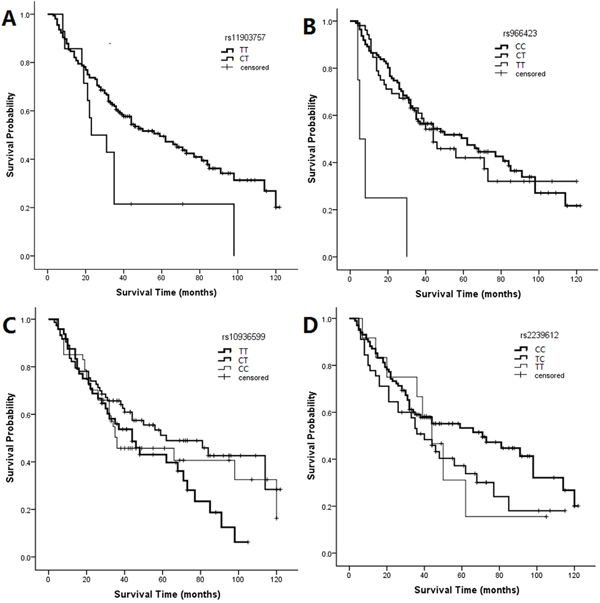 Kaplan-Meier curves for SNPs associated with LSCC patient survival.