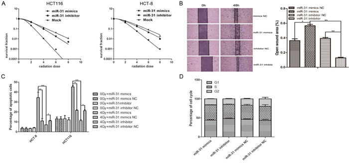 Up- or down-regulation of miR-31 in CAFs regulated the radiosensitivity and X-ray-induced apoptosis of co-cultured CRC cells.