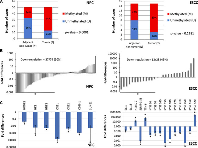 Validation of NID2 promoter hypermethylation and its down-regulation in NPC and ESCC.