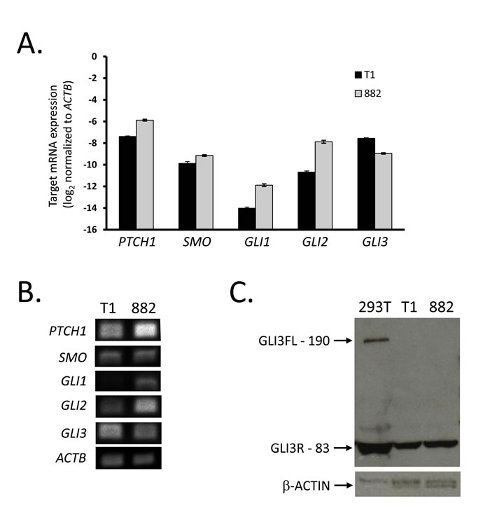 GIST cell lines express Hedgehog signaling components.