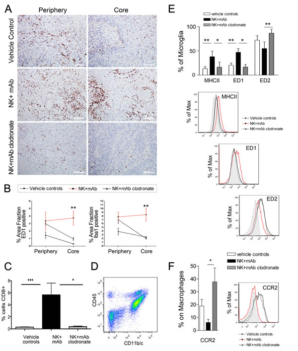 Increased recruitment of ED1+ activated macrophage/microglia in NK+mAb9.2.27 treated tumors.