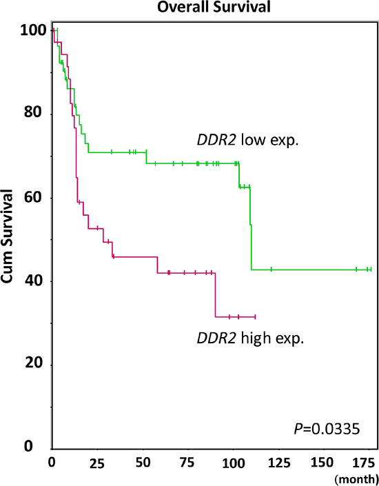 Kaplan-Meier plot generated from GSE31684 reveals the prognostic significance of DDR2 expression level for the overall survival of urothelial carcinoma by comparing 37 cases with high DDR2 expression and 56 with low expression (P = 0.0335).