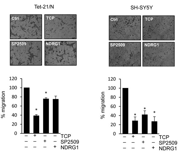 Trans-membrane migration assay of Tet-21/N and SH-SY5Y cells treated with vehicle, TCP or SP2509, or NDRG1-transfected.