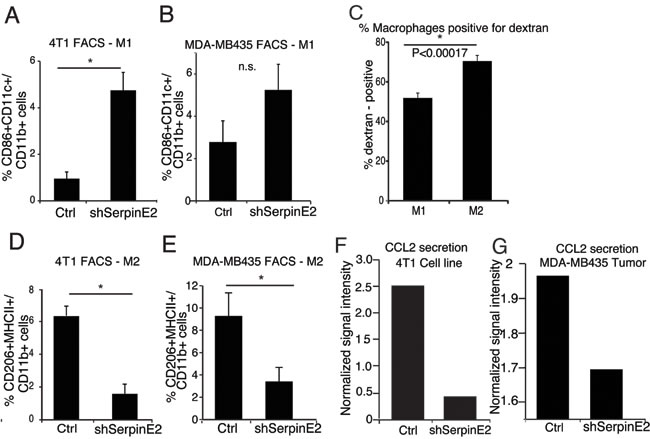 SerpinE2 controls tumor-promoting macrophages and CCL2 levels. (