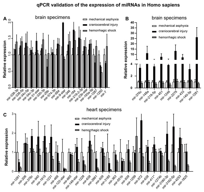 RT-qPCR detection of differentially expressed miRNA identified