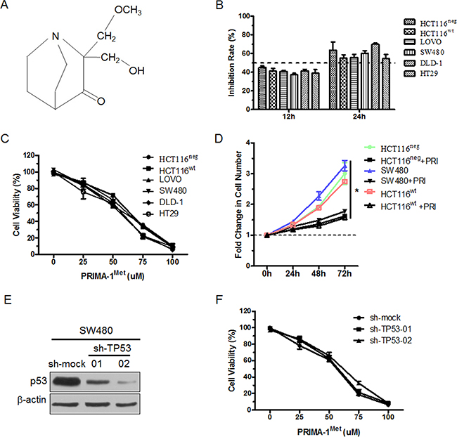 PRIMA-1Met inhibited the proliferation of CRC cells with different p53 status.