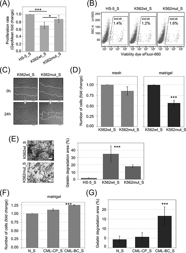 Influence of eIF2α phosphorylation on the invasion potential of HS-5 stromal fibroblasts.