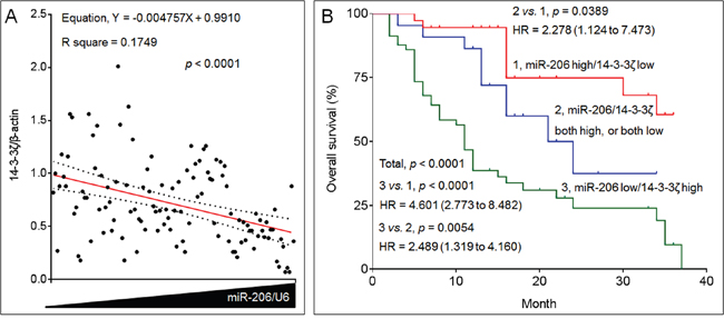 The clinical relationships between miR-206 and 14-3-3ζ in NSCLC.