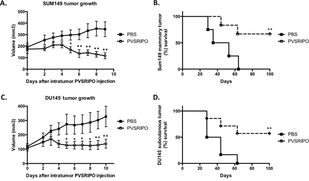Single intratumoral administration of PVSRIPO in SUM149 and DU145 xenografts results in tumor regression and survival benefit.
