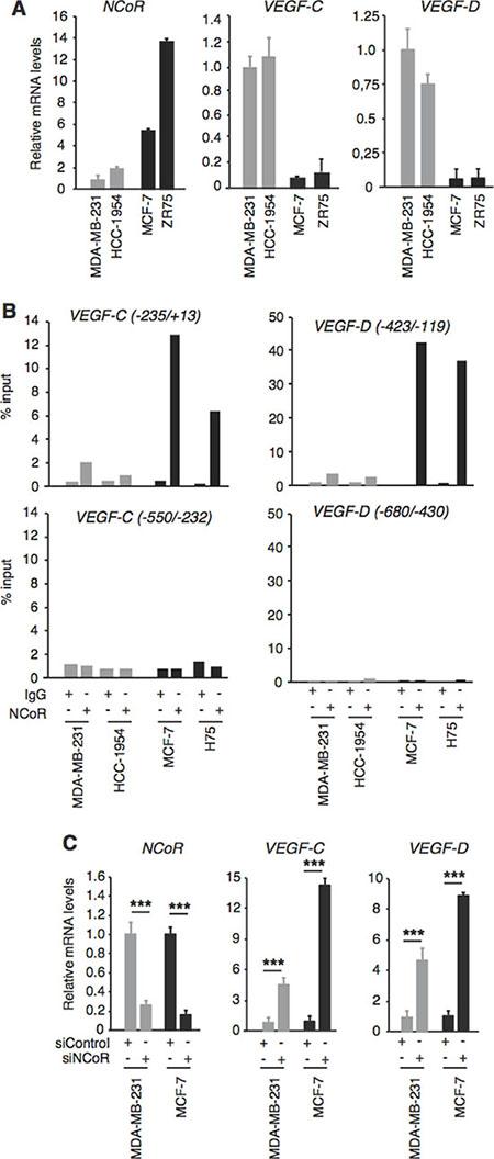 NCoR represses VEGF-C and VEGF-D gene transcription NCoR represses VEGF-C and VEGF-D gene transcription.
