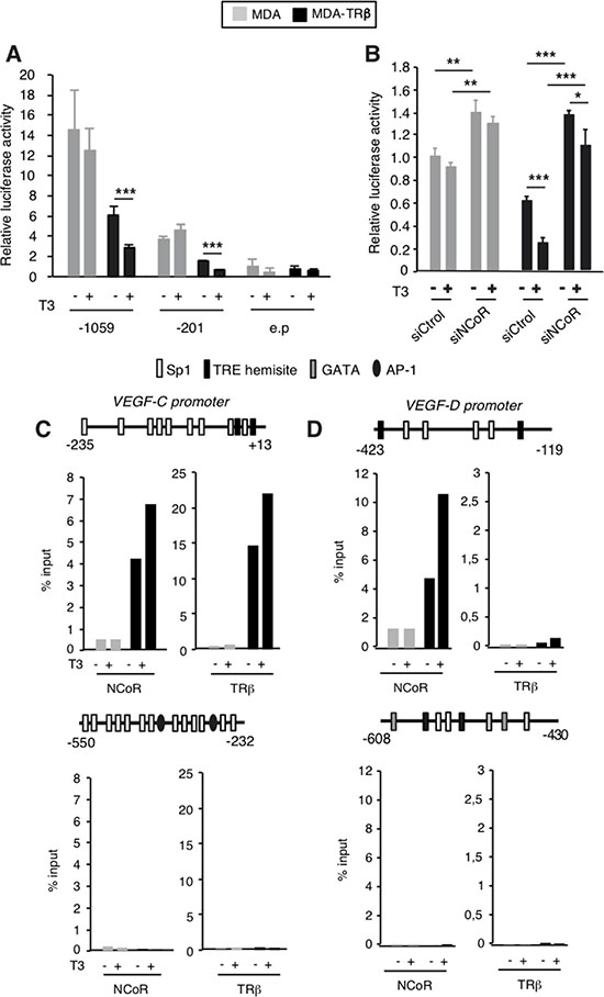 NCoR is involved in transcriptional inhibition of the VEGF-C and VEGF-D genes by TRβ.