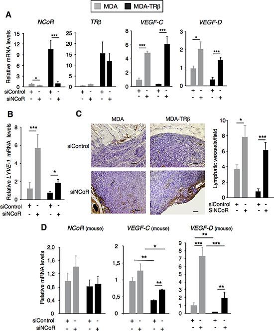 NCoR and TRβ inhibit tumor lymphangiogenesis.
