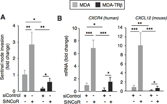 NCoR depletion increases chemokine expression and sentinel node invasion.