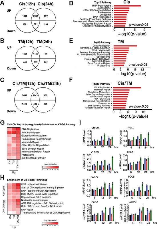 Microarray analysis of MDA-MB-231 cells treated with cisplatin (Cis), TM or cisplatin/TM (Cis/TM).