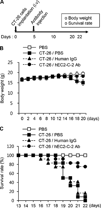 Survival rate in the lung metastasis mouse model.