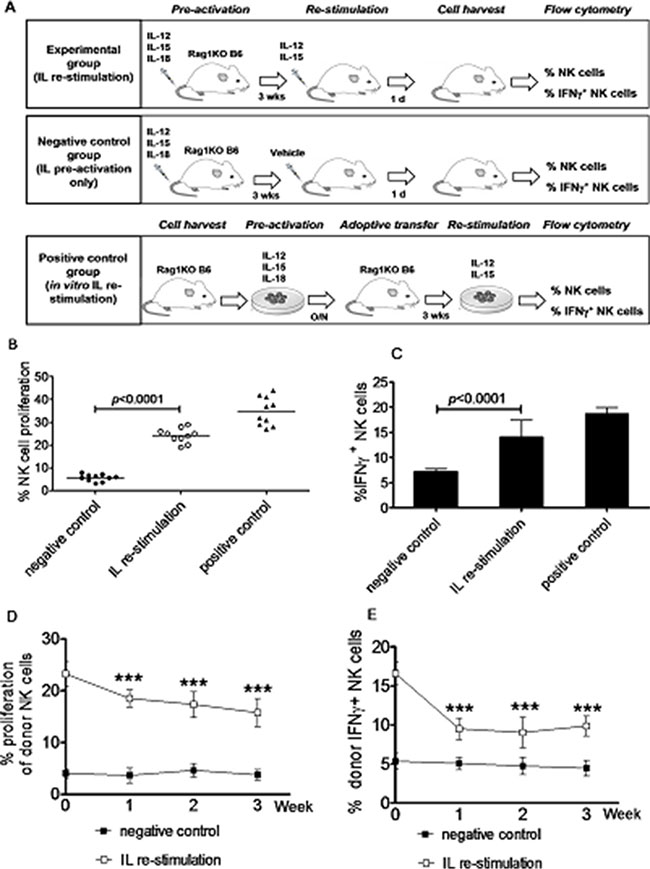 Generation of memory-like NK cells with enhanced IFNγ production by in vivo interleukin pre-activation and re-stimulation.