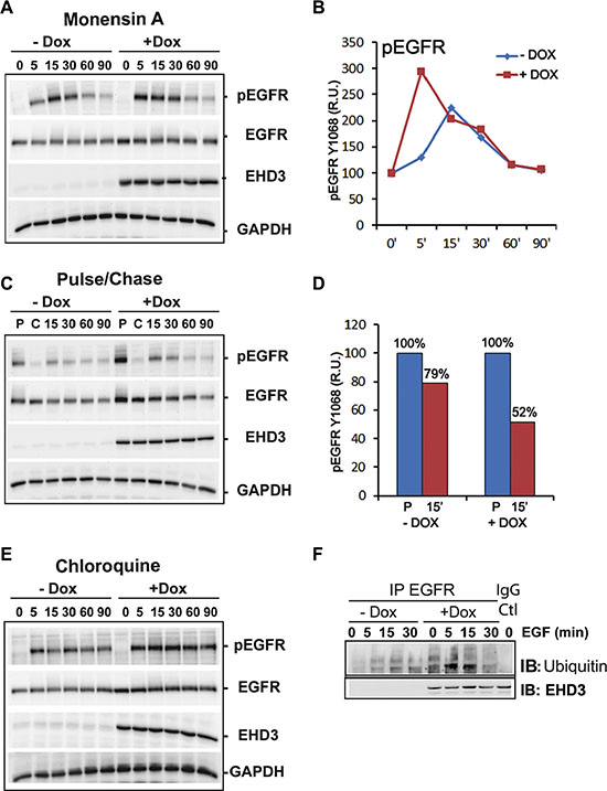 EHD3 increases ligand-induced EGFR ubiquitination and lysosomal degradation.