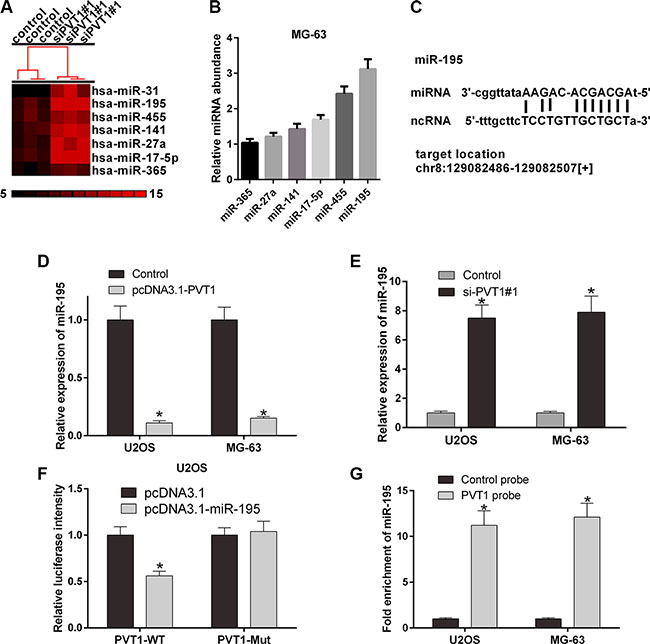 PVT1 negatively regulates miR-195 in osteosarcoma cells.